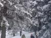 schneeschuhtour-gulmen-03