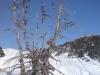 schneeschuhtour-gulmen-34