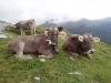 Klettersteige Grindelwald (48)